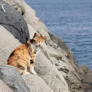 九州D島の猫たち 2021年3月 その13