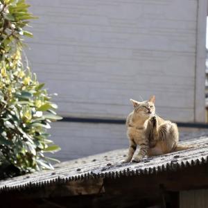 九州D島の猫たち 2021年3月 その14