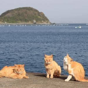九州D島の猫たち 2021年3月 その15