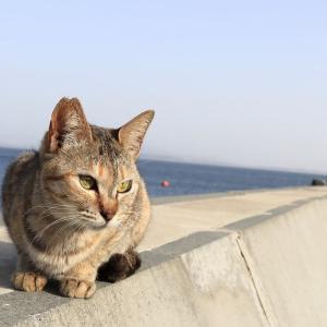 九州D島の猫たち 2021年3月 その16
