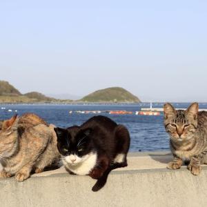 九州D島の猫たち 2021年3月 その17