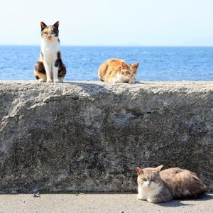 九州D島の猫たち 2021年4月 その22