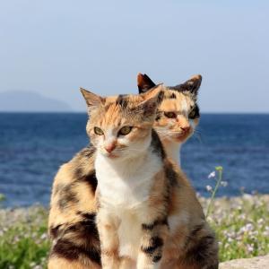 九州D島の猫たち 2021年4月 その23