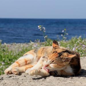 九州D島の猫たち 2021年4月 その24