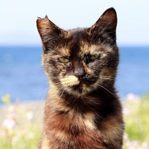 九州D島の猫たち 2021年4月 その25