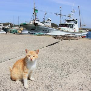 九州D島の猫たち 2021年4月 その29