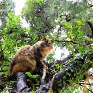 オキナワの島猫たち 2021年4月 その40