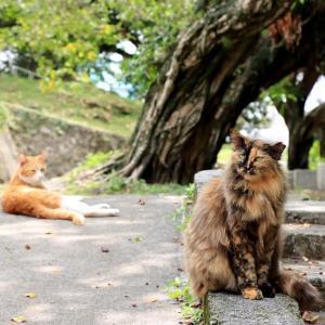オキナワの島猫たち 2021年4月 その47