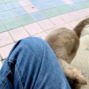 沖縄の島猫たち 2021年5月 その1