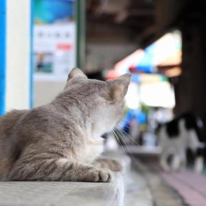 沖縄の島猫たち 2021年5月 その3