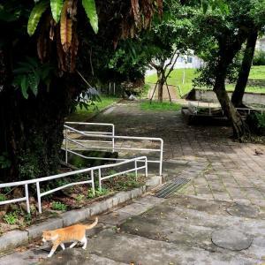 沖縄の島猫たち 2021年5月 その4