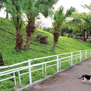 沖縄の島猫たち 2021年5月 その5