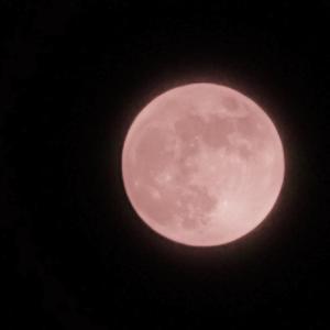 6月の満月はストロベリームーン【Under the Strawberry moon】