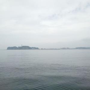相模湾のショウサイフグ釣り