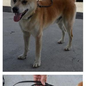 迷い犬情報