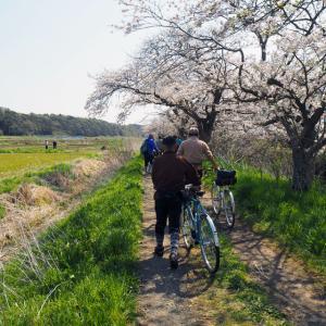 手賀沼、印旛沼から吉高の大桜へ
