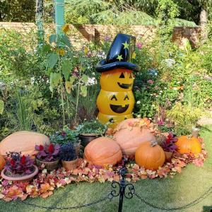 秋のローズガーデンはハロウィン