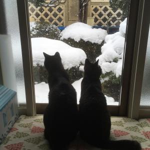 大雪が降った時の猫ちゃん