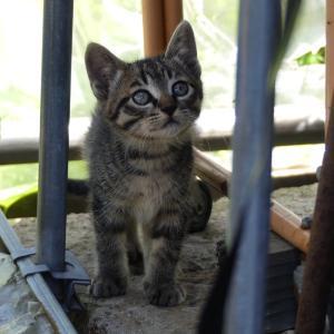 我が家の子猫ちゃんの母親、A子。