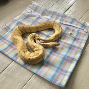 爬虫類の引っ越し方法について『対応した業者はある?』