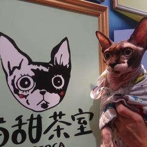 猫甜茶室 capioca(ねこてんちゃしつカピオカ)