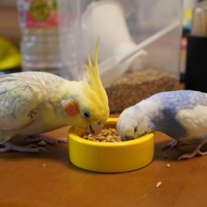 コロナと鳥