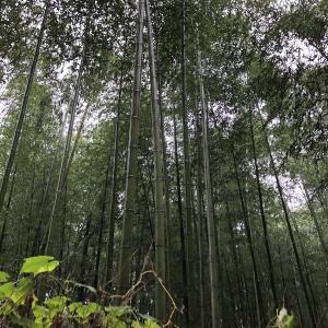 大人女子の京都歩き②嵐山~錦市場