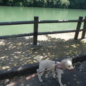 庄川水記念公園の「割り箸で作った橋」