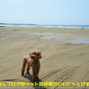 (新)犬連れ訪問宿【中部】