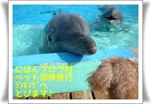 (新)犬連れ訪問宿【近畿】