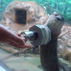 5歳&2歳とサンピアザ水族館!人懐っこいアザラシがかわい過ぎる♡