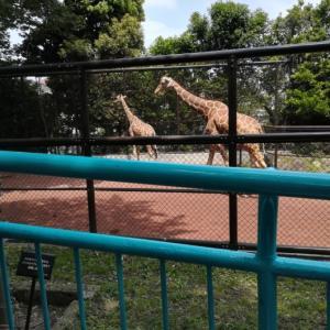 【野毛山動物園】無料で約100種の動物に会える&ふれあい体験も!