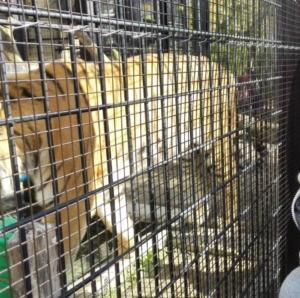 【京都市動物園】大迫力!動物を間近で見られておもしろい♪
