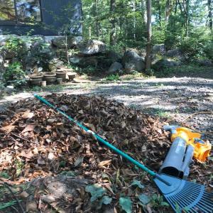 秋は毎日毎日落ち葉掃き