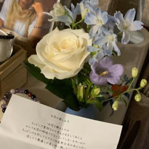 4/6 今週のお花【Bloomee life】