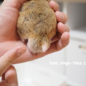 【再び動物病院へ】精巣肥大、腫瘍疑い。お薬を改めて処方してもらいました。