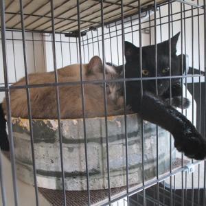 【猫】そらくろが猫団子になるまでの過程