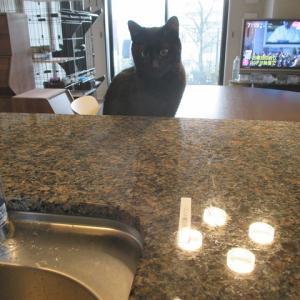 【猫】猫が煮物を邪魔する問題