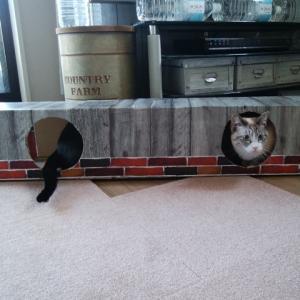 【猫】手作り猫トンネル