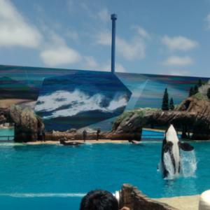 SeaWorldの見どころ - Orca Show(シャチのショー)