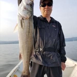 本日も良く釣れています。