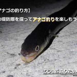 【アナゴの釣り方】 夜の堤防際を探ってアナゴ釣りを楽しもう!