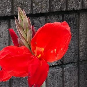 九月の庭の花は