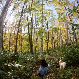 バーチの散歩がてら裏山紅葉狩り。