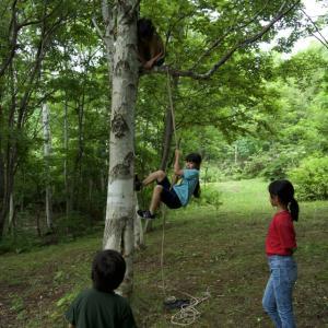 日曜日は余市道場。クワガタ探し&木登り+ツリークライミング。