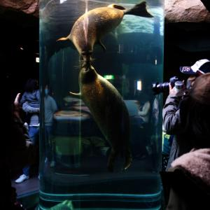 道北に用事があったのでついでに旭山動物園。