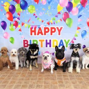 犬の学校CoLorでももちゃんの誕生祝いをしてもらいました