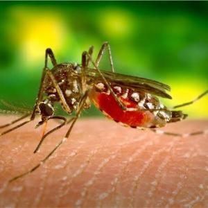 【フィリピンでデング熱に感染したら?予防・症状・治療法まとめ】