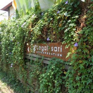 テガル・サリの敷地案内 レセプション~23号室