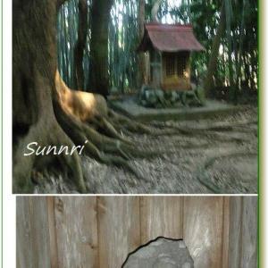朝の散歩 熊野の神社の境内